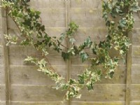 Artificial Flower and  Ivy Garlands